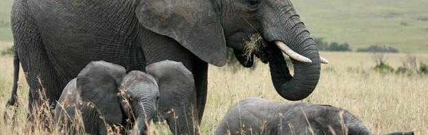 Bravo-Tours-Mara-Elefant