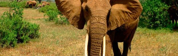 Bravo-Tours_Mara-Elefant