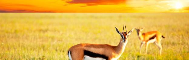 Bravo-Tours_antilope